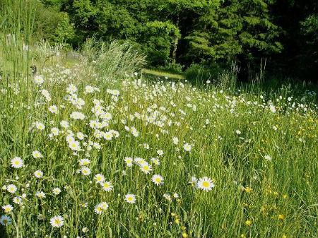 L`Orchidée Home - Champ de marguerites - Haute-Marne